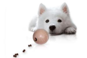 Gutes Hundezubehör