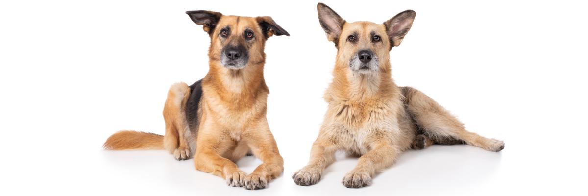 Tierschutzhunde bei UNIQUE DOG