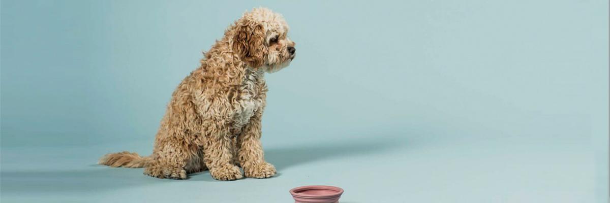 Hevea - dänisches Hundespielzeug und Hundenäpfe