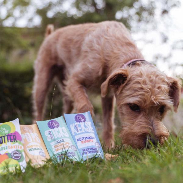 Futterproben für den Hund - ausgelegt auf einer Wiese
