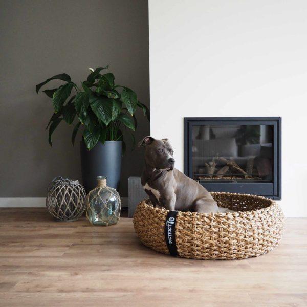 Hundekorb auch für größere Rassen