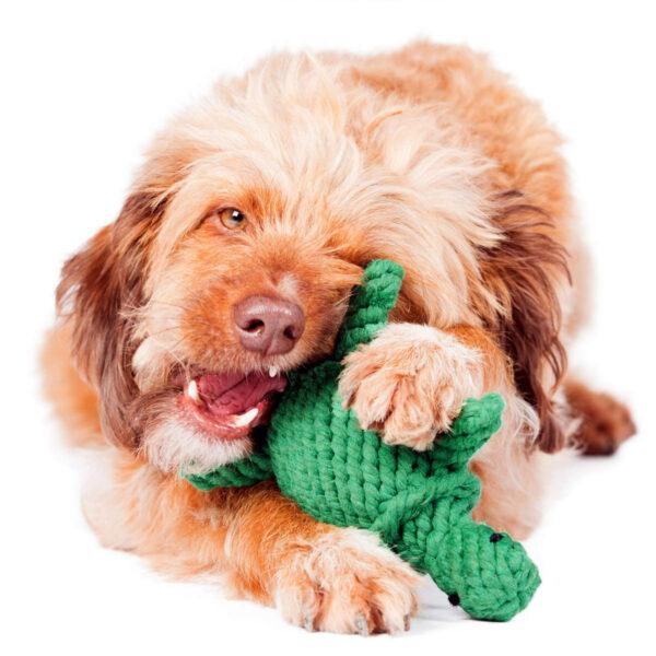 Zahnfreundliches Seil Spielzeug für den Hund - Laboni