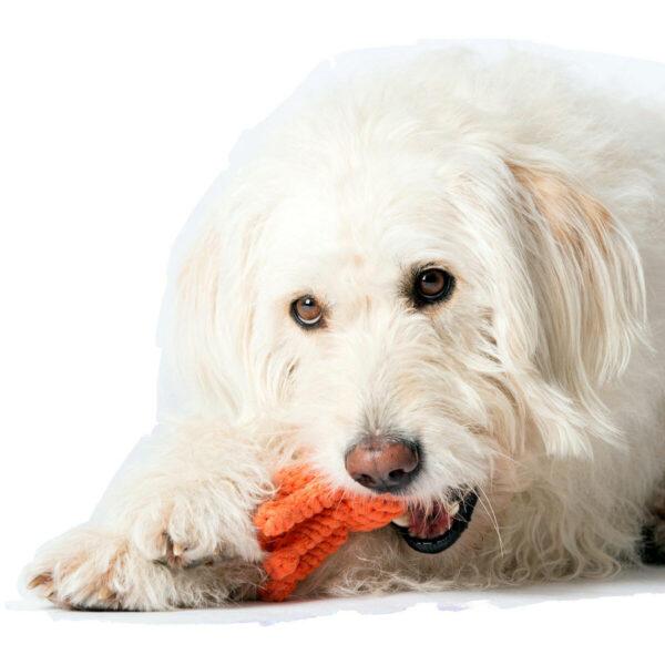 Tau Hundespiezeug aus Baumwolle - Tintenfisch