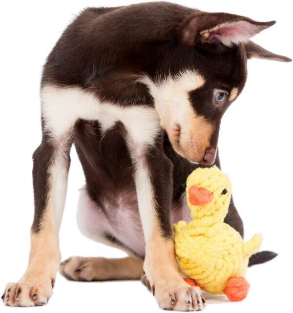 Seilspielzeug für den Hund: Spielen und Zahnpflege